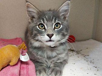 Adopt A Pet :: Adam  - Laramie, WY
