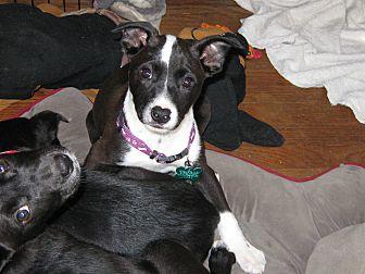 Ashley featured image