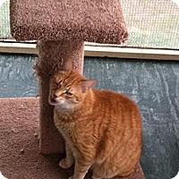 Adopt A Pet :: LUKE - MECHANICSVILLE, VA