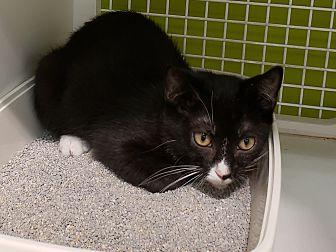 Adopt A Pet :: domino  - millville, NJ