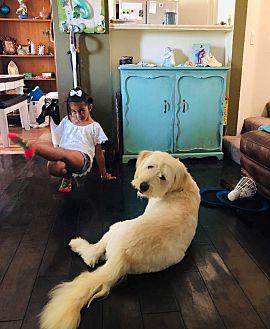 Adopt A Pet :: Digby  - Bakersfield, CA