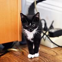 Adopt A Pet :: Ryuji - New York, NY