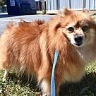 Adopt A Pet :: Margie