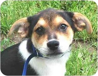 Mia Dog For Adoption