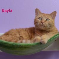 Adopt A Pet :: Nayla - Baton Rouge, LA