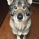 Adopt A Pet :: Bandit (COURTESY POST)