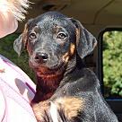 Adopt A Pet :: Cinder