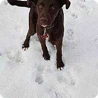 Adopt A Pet :: Reese - Pierrefonds, QC