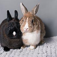 Adopt A Pet :: Mini Pom Pom & Mini NightLight - Los Angeles, CA