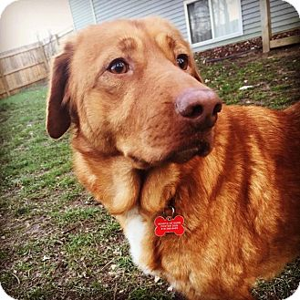 Retriever (Unknown Type) Mix Dog for adoption in Grand Rapids, Michigan - Reese