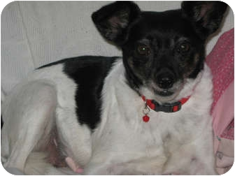 Terrier (Unknown Type, Small) Mix Dog for adoption in Owatonna, Minnesota - Ruby