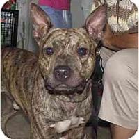 Adopt A Pet :: Buddy Epson - Milwaukee, WI