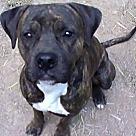 Adopt A Pet :: Scout Evans