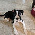 Adopt A Pet :: Beverly