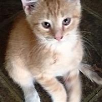 Adopt A Pet :: Palmer - Lebanon, PA