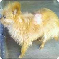 Adopt A Pet :: Nutmeg - Riverside, CA