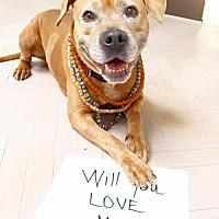 Adopt A Pet :: Ellie Mae - Santa Monica, CA
