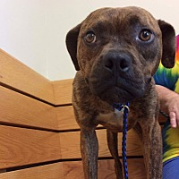 Adopt A Pet :: Emmy - Westminster, MD