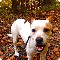 Adopt A Pet :: Hope - Wakefield, RI