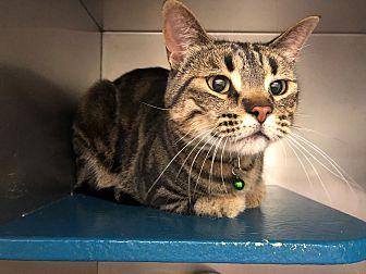 Adopt A Pet :: Landon  - Moose Jaw, SK