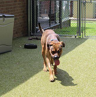 Adopt A Pet :: Meatloaf  - Germantown, TN