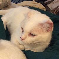 Adopt A Pet :: Millie - Wheaton, IL