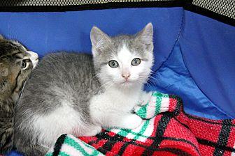 Adopt A Pet :: Vladimir  - Troy, MI