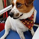 Adopt A Pet :: Molly (COURTESY POST)