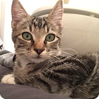 Adopt A Pet :: Toto - Ogallala, NE
