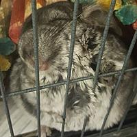 Adopt A Pet :: Skippy - NJ - Granby, CT