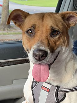 Adopt A Pet :: A second chance for Sadie..  - Ft Myers Beach, FL