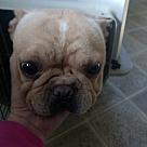 Adopt A Pet :: Francie