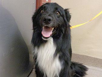 Adopt A Pet :: Ralph  - Laramie, WY