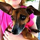 Adopt A Pet :: Stella Adoption Pending!!
