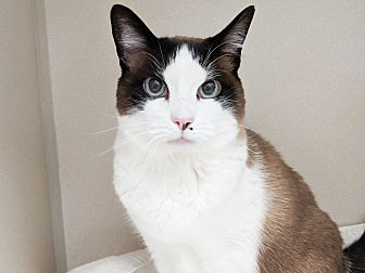 Adopt A Pet :: Dixie  - Laramie, WY