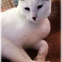 Adopt A Pet :: Scottsdale - Huntington, NY