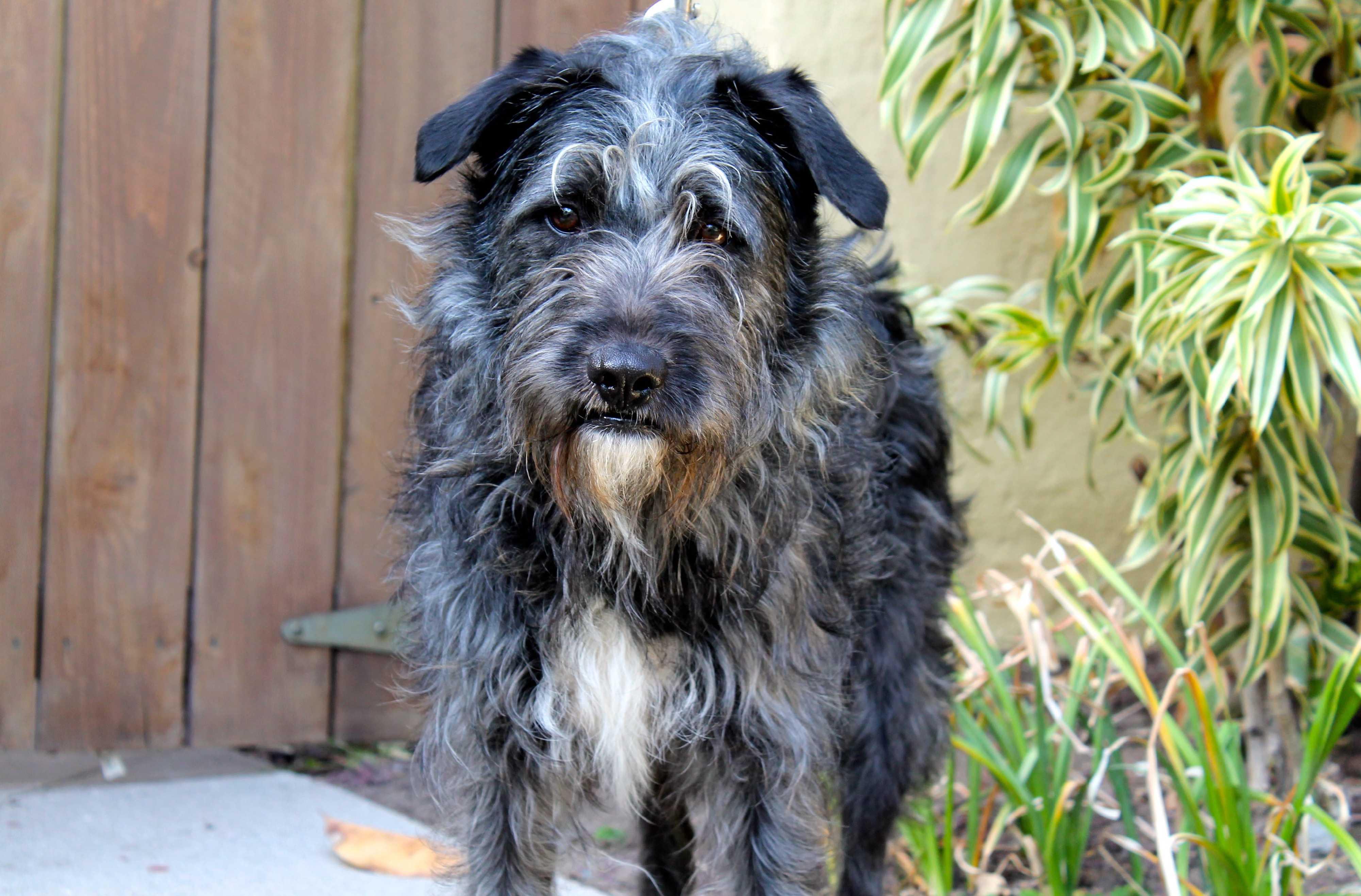 Meet Cholo a Pet for Adoption