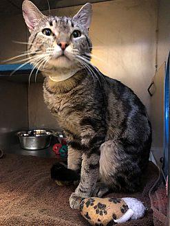 Adopt A Pet :: Twix  - Moose Jaw, SK
