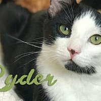 Adopt A Pet :: Ryder -bonded to Frankenkitten - Los Angeles, CA