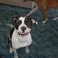 Adopt A Pet :: Rogue CL - Cedar Rapids, IA