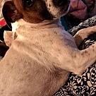 Adopt A Pet :: Bella 2 (COURTESY POST)