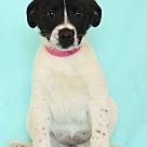 Adopt A Pet :: Zuras