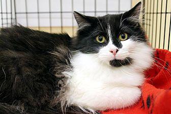 Adopt A Pet :: Bernard  - Troy, MI