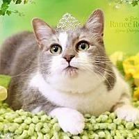 Adopt A Pet :: Tika - Sterling Heights, MI