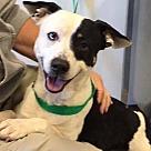 Adopt A Pet :: Foster