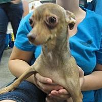 Adopt A Pet :: Spaz - Fresno, CA