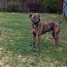 Adopt A Pet :: Tucker (COURTESY POST)