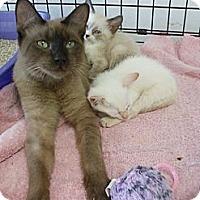 Adopt A Pet :: Latte - Bunnell, FL
