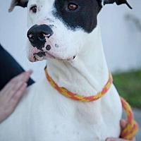 Adopt A Pet :: Renegade - Bonaire, GA