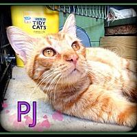 Adopt A Pet :: PJ - Hartford City, IN